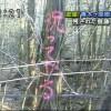 これは嬉しい!山梨県にある自殺の名所、青木ヶ原樹海(通称富士の樹海)に残されたメッセージ(笑)