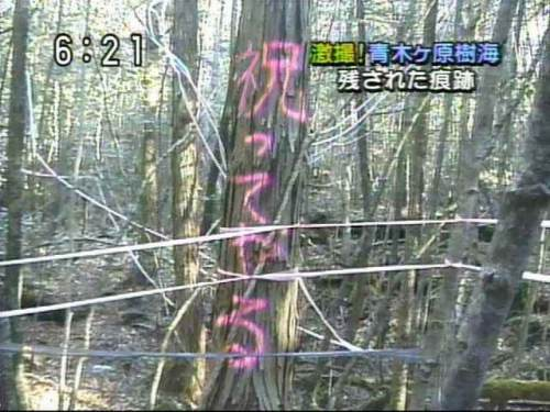【テレビの事件おもしろ画像】富士の樹海に残されたメッセージ「祝ってやる」(笑)