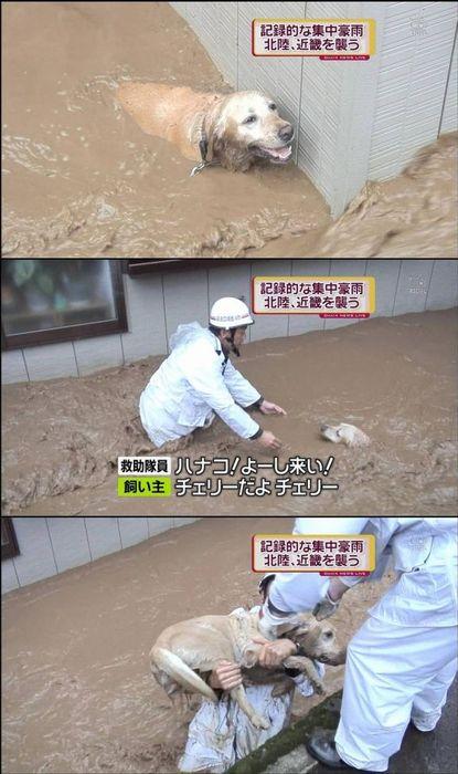 【テレビの犬おもしろ画像】豪雨で迷子の犬を助ける救助隊員、チェリーをハナコと呼ぶハプニング(笑)