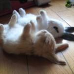 かわいくて笑える!犬、猫、その他動物の面白画像まとめ【1】