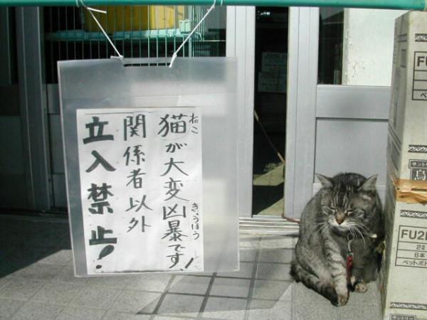 面白画像 注意書き! 「猫が大変凶暴です!関係者以外立ち入り禁止!」(笑)animal_0005