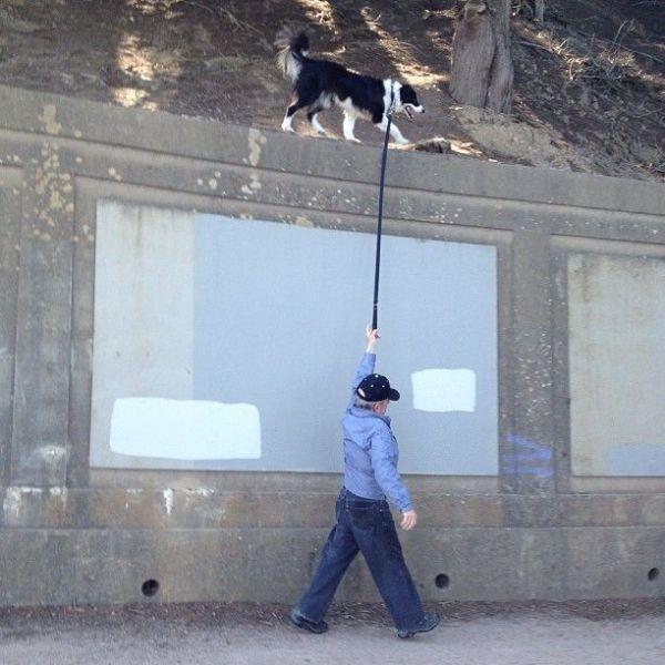 面白画像 もう無理! 塀の上を散歩する犬について歩くおじいちゃん、もう限界です(笑)animal_0006