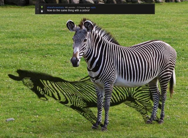 面白画像 謎すぎる生態! シマウマの影はカラダの白い部分しか影になりません(笑)animal_0009