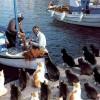 餌くれ! 港に帰ってきた漁師からのおこぼれを待つ猫の集団(笑)