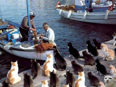 【猫おもしろ画像】港に帰ってきた漁師からのおこぼれを待つ猫の集団(笑)animal_0012