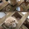 抜けない! 外の景色を見たくて柵から顔を出した猫(笑)