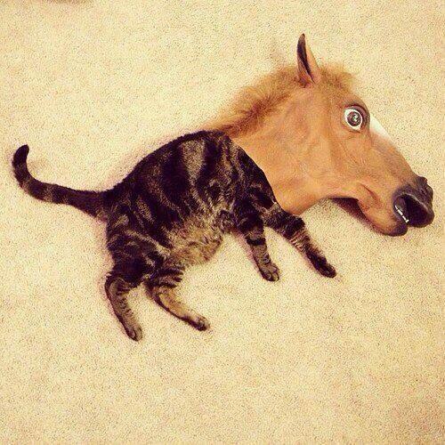 面白画像 猫馬? 馬の被り物の中で寝ている猫、馬なのか猫なのか分かりません(笑)animal_0018