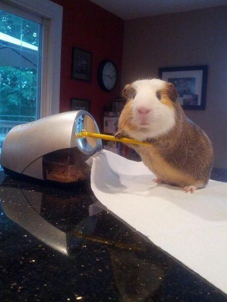 面白画像 ピクサー映画? ハムスターが自分の巣を鉛筆削りで作る姿がかわいい(笑)animal_0019
