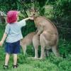 今忙しいんですけど! カンガルーが忙しくても、無邪気な子どもには関係ありません(笑)