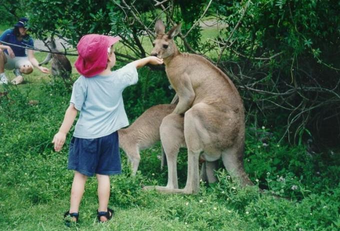 【面白画像】今忙しいんですけど! カンガルーがお取り込み中でも、無邪気な子どもには関係ありません(笑)hhh_0017