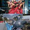 グルグル! ダンスボーカルユニット「エグザイル」のダンスパフォーマンスと鳩の群れが完全一致(笑)