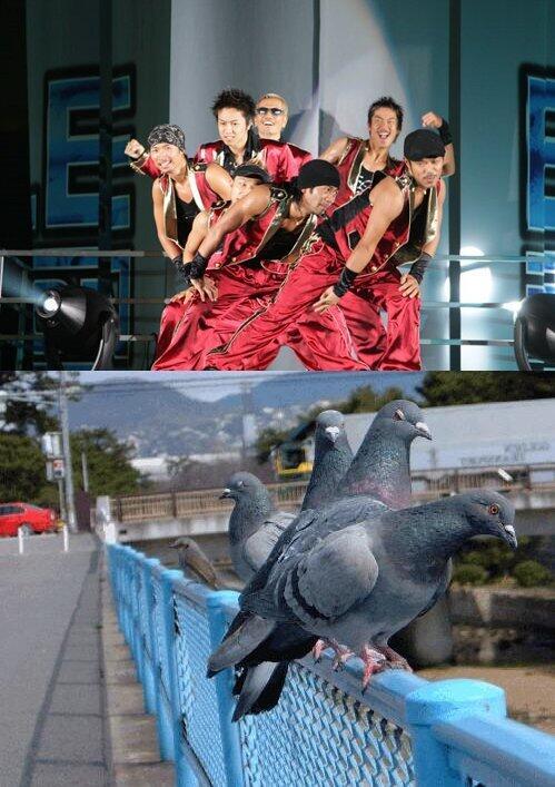 完全一致! ダンスボーカルユニット「エグザイル」のダンスパフォーマンスと鳩の群れ(笑)
