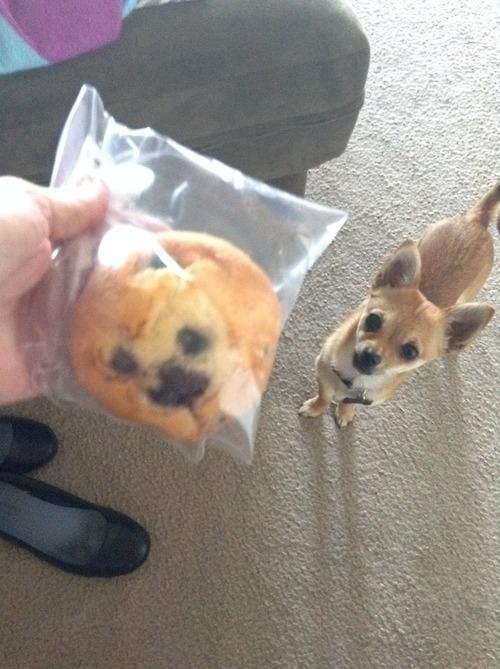 【犬と食べ物おもしろ画像】ペットのチワワとブルーベリーマフィンが完全一致(笑)