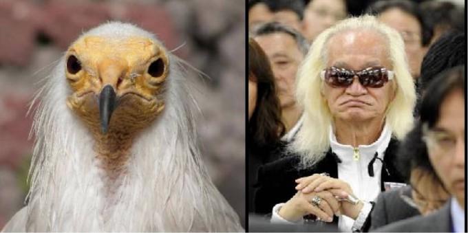 【面白画像】鳥類? ミュージシャン内田裕也と海外に生息するエジプトハゲワシが完全一致(笑)iti_0011