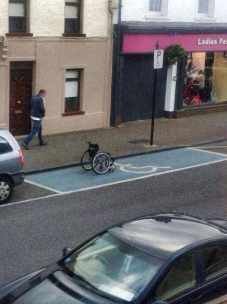 面白画像 障がい者用の自動車パーキングに駐車されている車(笑)foreign_0002