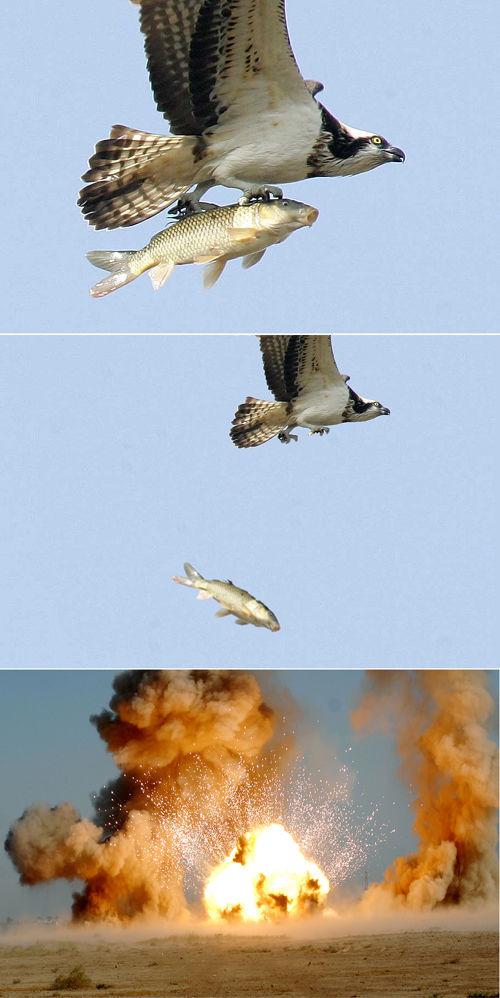 面白画像 鷲と鯉型の爆弾(笑)foreign_0015