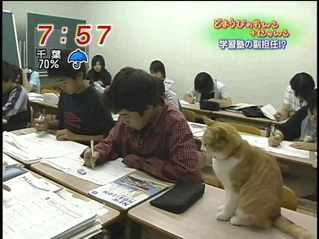 副担任は猫! 学習塾で生徒の授業を見守る副担任の猫がかわいすぎ(笑)