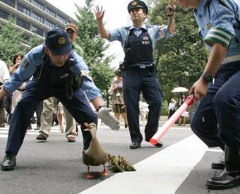 面白画像 道を歩く超VIPなファミリーに、警察官たちの警護にも力がはいります(笑)animal_0020