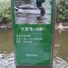 説明必要? 兵庫県神戸市の神戸どうぶつ王国(旧、神戸花鳥園)の「マガモ」の説明プレートが雑すぎます(笑)