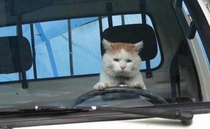 面白画像 人相の悪いトラックの運転手(笑)animal_0026