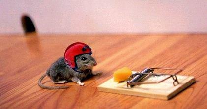 面白画像 ネズミが、罠があるのを承知で大好物のチーズを取ろうと考えた秘策(笑)animal_0028