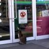 入店禁止! ファミリーマートの入口に貼られた「入店禁止」の張り紙に呆然とするネコ(笑)