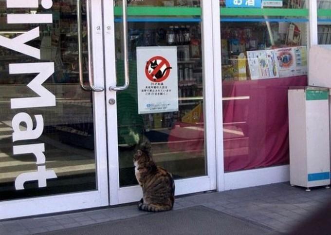 【猫おもしろ画像】ファミリーマートの入口に貼られた「入店禁止」の張り紙に呆然とするネコ(笑)animal_0030