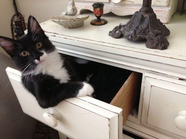 【猫おもしろ画像】棚の引き出しに住んでいるかのような猫のおもしろいポーズ(笑)
