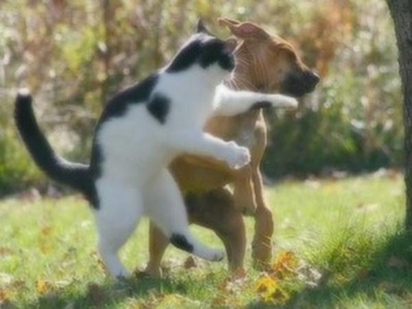 面白画像 体格で負けてても、ネコだってイヌに猫パンチ食らわせます(笑)animal_0038