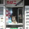 お留守番! タバコ屋で店主の代わりに店番をするイヌが退屈そうです(笑)