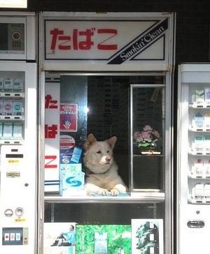 面白画像 タバコ屋で店主の代わりに店番をするイヌが退屈そうです(笑)animal_0039