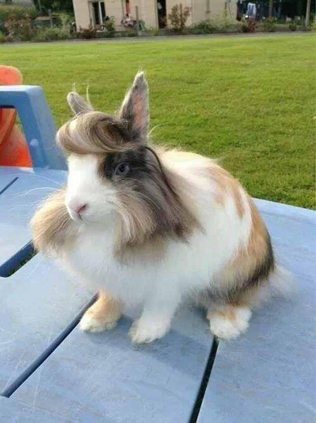 面白画像 モテモテ! 髪型がオシャレなイケメンすぎるウサギ(笑)beauty_0023