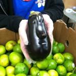 こんな食べ物あるの? 変な形の野菜や日常で見かけた面白い食べ物まとめ【2】
