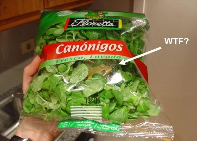 面白画像 海外で販売されていたノヂシャ(サラダの葉)の袋の中にカエル(笑)food_0037