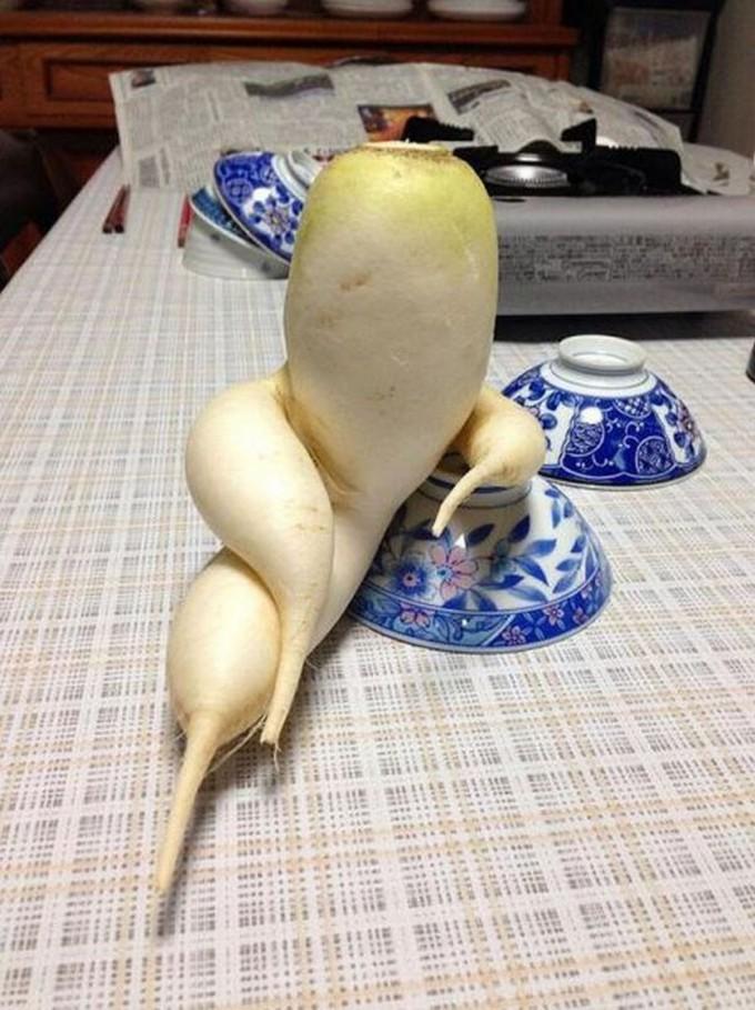 面白画像 セクシー! こちらを誘惑するような形のダイコンが色っぽすぎます(笑)food_0038