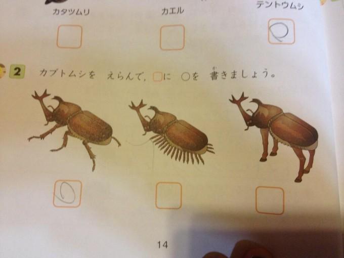 面白画像 笑える問題! テストの問題「カブトムシを選んで四角に丸を書きましょう。」がおかしい(笑)kids_0023