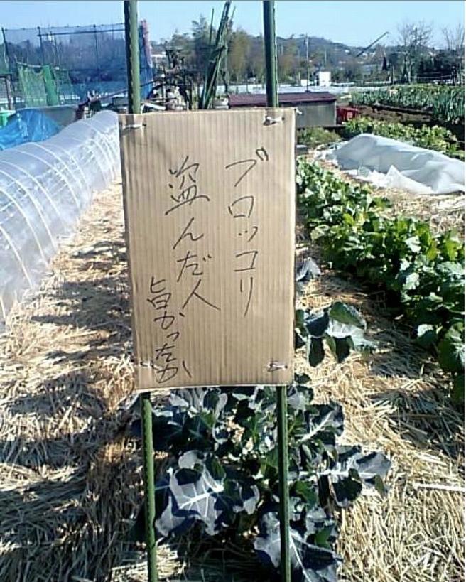 面白画像 器がでかい! ブロッコリーを盗まれた農家が盗んだ人に宛てた注意書き(笑)adsign_0039