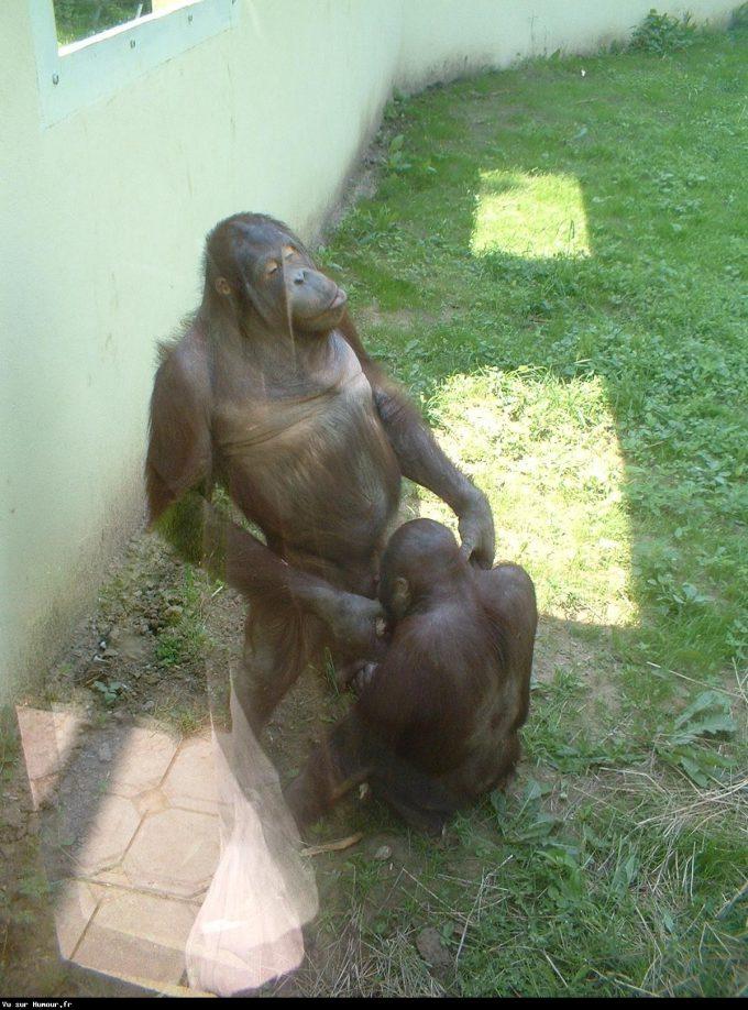びっくり! 動物園で見た猿たちの驚きの行動が子どもに見せられない(笑)