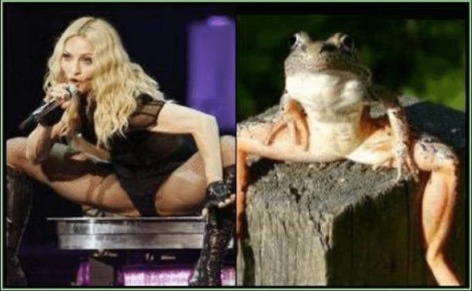 面白画像 大股広げたマドンナのパフォーマンス姿とカエルが一致(笑)iti_0038