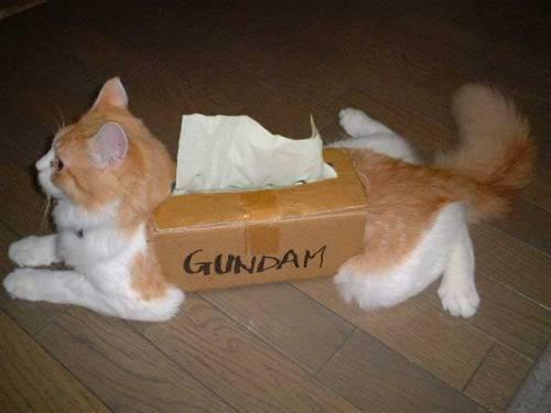 【コスプレ猫おもしろ画像】猫によるガンダムのおもしろいコスプレ(笑)