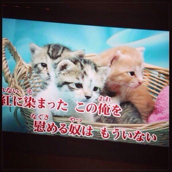面白画像 X JAPAN『紅』のカラオケ映像が可愛すぎます(笑)syame_0039