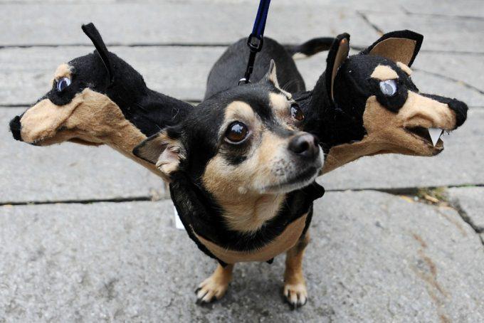 ハロウィン面白画像 ワォ? ハロウィンにボストンで行われた『ドッグコスチュームコンテスト』で大賞を取ったチワワのケルベロス仮装(笑)helloween_0047