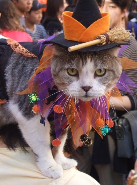 ニャに? 猫だってハロウィン仮装したい!ということでカワサキハロウィン2007に出場(笑)