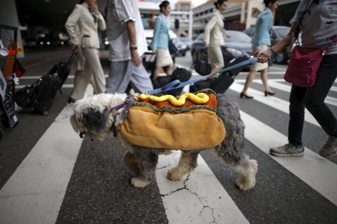 【ハロウィンの犬おもしろ仮装画像】ハロウィンのロサンゼルス国際空港で見かけた「ホットドッグ」(笑)helloween_0066