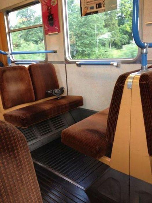 面白画像 一人旅! 羽があるのになぜか電車に乗って移動するぼっちの鳩(笑)animal_0044