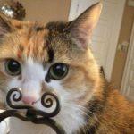 かわいくて面白いイヌ・ネコのおもしろ画像まとめ【3】