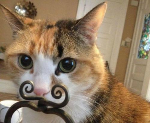 キリッ! 完璧なタイミングで撮影された三毛猫ホームズ(笑)