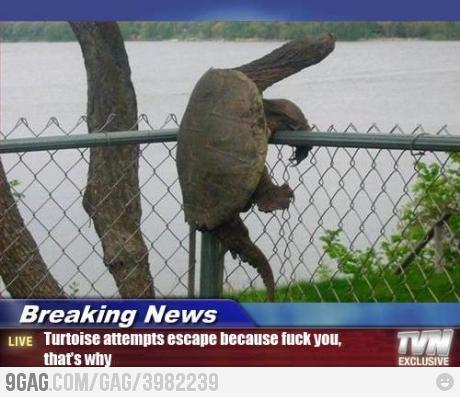 面白画像 カメが檻からの脱出を試みてとんでもない行動に出る(笑)animal_0053