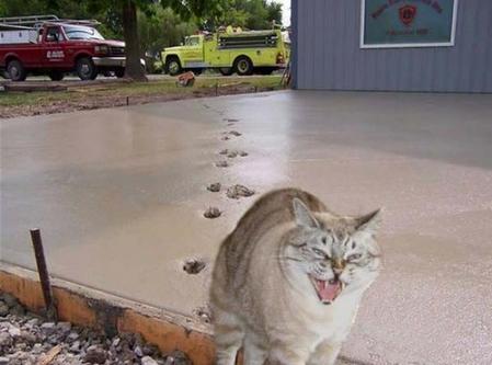 足跡! いたずら猫、コンクリートが固まっていないのに平然と足跡をつける(笑)