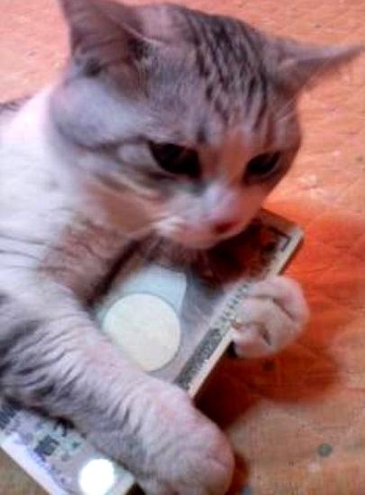 渡さないニャ! 一万円札を大事そうに抱えるネコ(笑)
